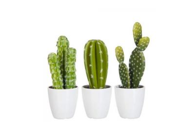 3 cactus avec leur pot